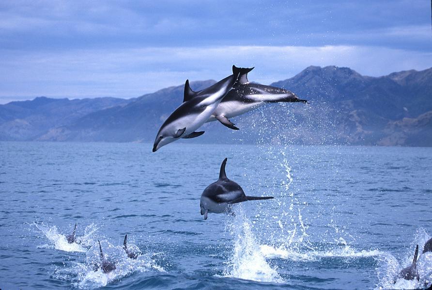 rencontre dauphin marineland avis Cayenne